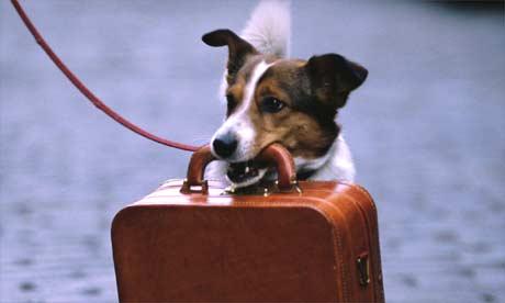 Come fare la valigia al cane passionando - Come fare il bagno al cane ...