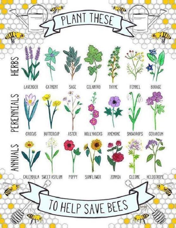Come contribuire al ripopolamento delle api