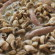 Salsiccia con i funghi